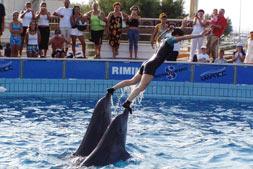 dolfijnen rimini